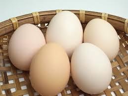 夏バテの卵