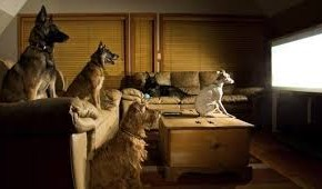 週末は大体、家でテレビを見ています。